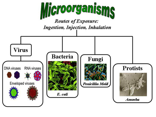 examination of living microorganisms Biology question bank for entrance exams for aipmt main other medical entrance exam prepration, question bank for biology classification of living organisms is given below.
